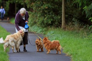 An image of a woman walking dogs