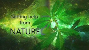 "Image of marijuana plant with text ""Getting Help from Nature"""